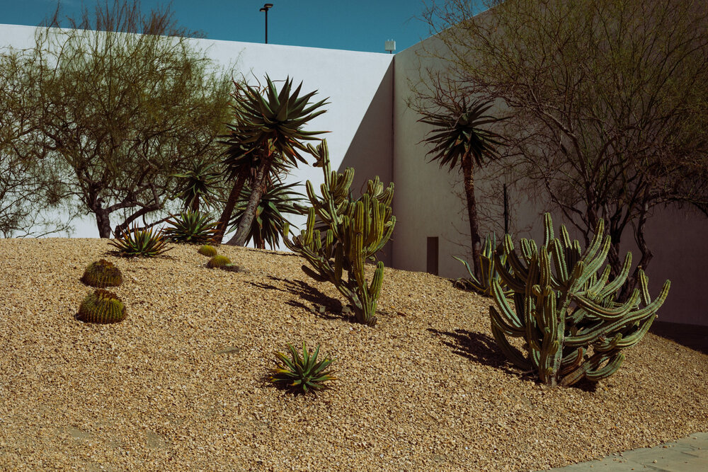 Rachel Off Duty: Cacti and Trees on a Mound at the Noguchi Garden