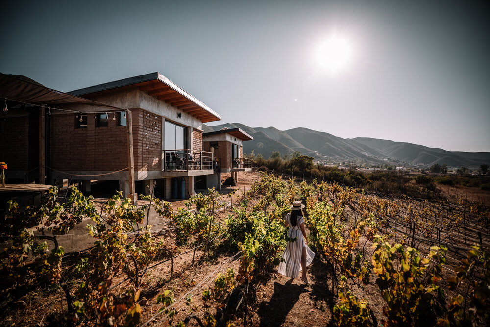 Rachel Off Duty: A Woman Wanders Through a Vineyard in Valle de Guadalupe, Mexico
