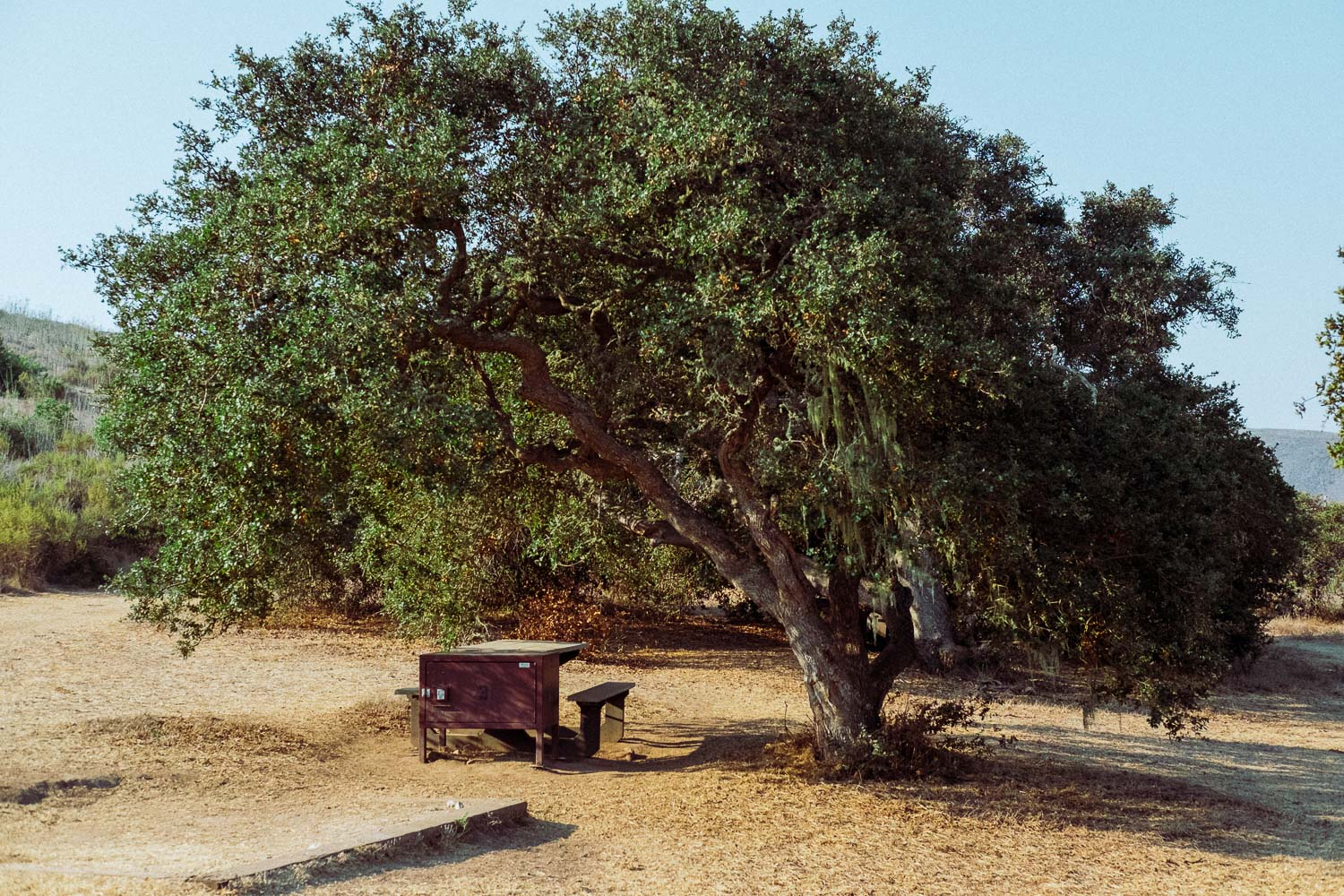 Rachel Off Duty: Campsite Under a Tree at Channel Islands National Park